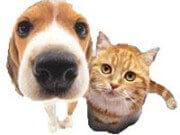 Emigreren met huisdieren naar Honduras